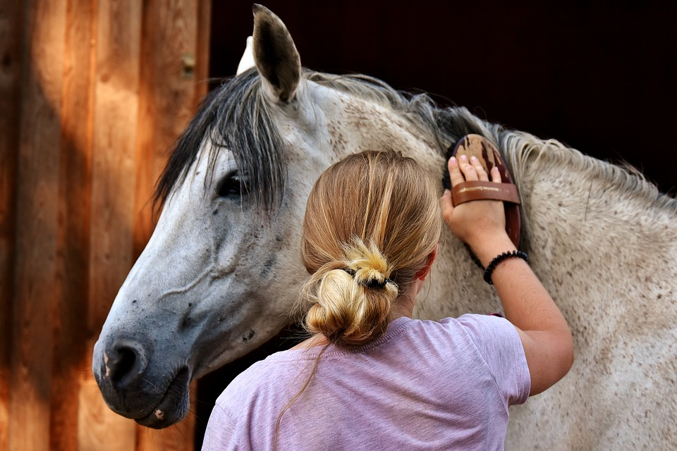 How Often Should You Groom a Horse?