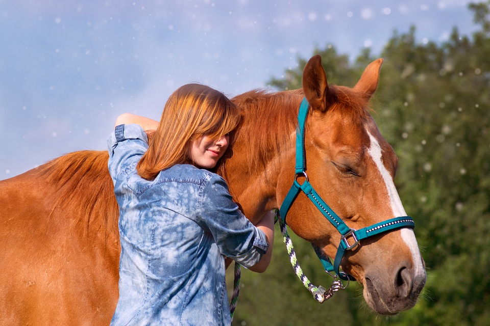 Choosing the Right Halter for Your Horse