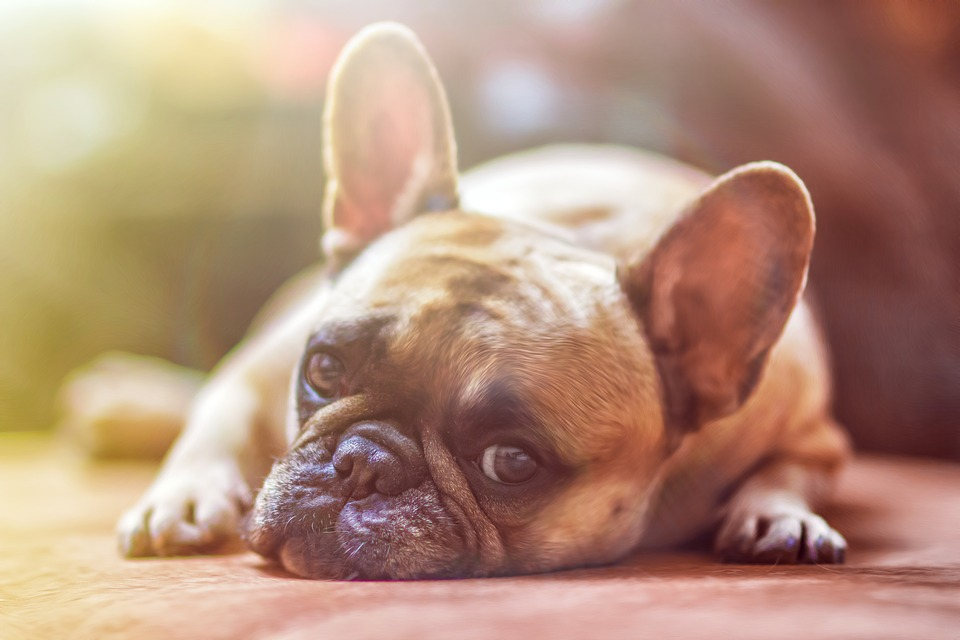 Signs That Your Dog is Stressed and How You Can Help
