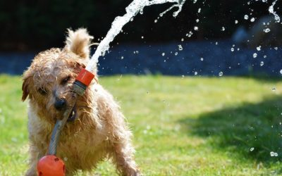Keep Your Dogs Cool This Summer: How and Why?