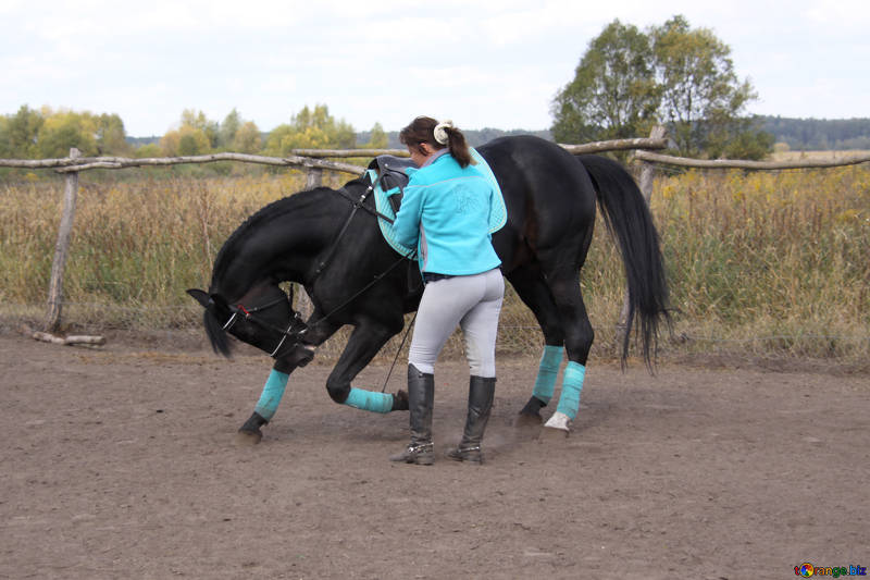 The Use of Over Reach Boots for Horses