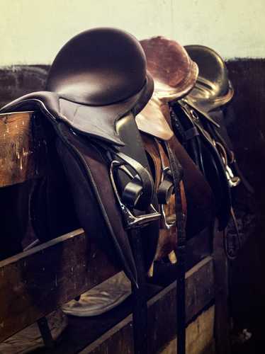 Buying Your First Saddle: The Beginner's Guide