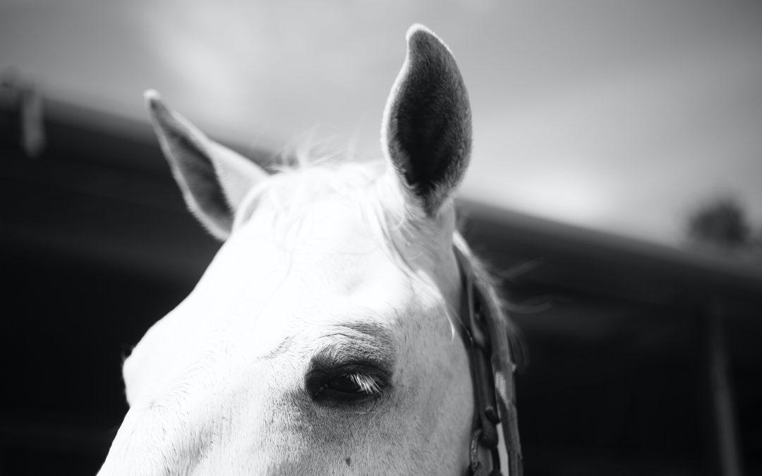 Lockdown Horse Care